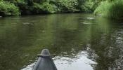 穏やかな流れの釧路川