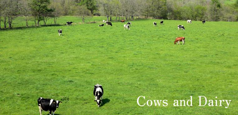 釧路観光情報~牛がくれる恵み