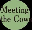 釧路観光情報~牛と触れ合う時間