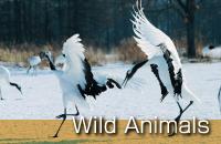 釧路観光情報~動物とのふれあい