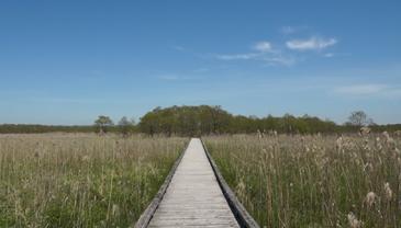 湿原写真3
